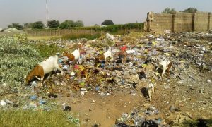 Waste plastic constitutes danger to animals too
