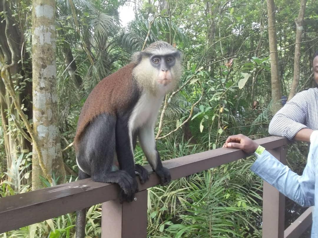 Rain forest Nigeria